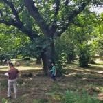I Dottori Forestali Francesco Giubbilei e Francesco Perugini durante un rilievo in bosco.